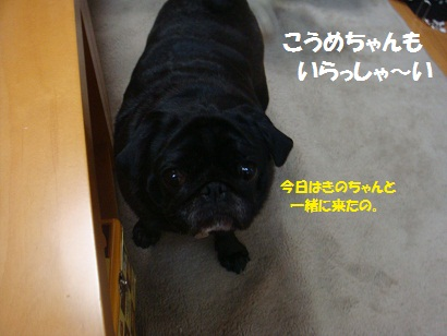 DSC05491_20111109210516.jpg