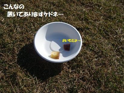 DSC05594_20120503152622.jpg