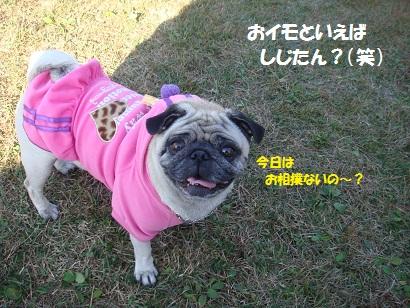 DSC05678_20120503122538.jpg