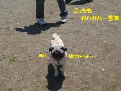 DSC05713_20111114211813.jpg