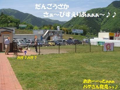 DSC05720_20111114192603.jpg