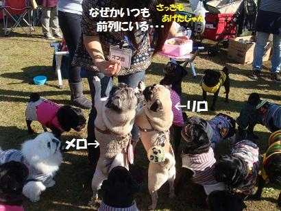 DSC05730_20120124033007.jpg
