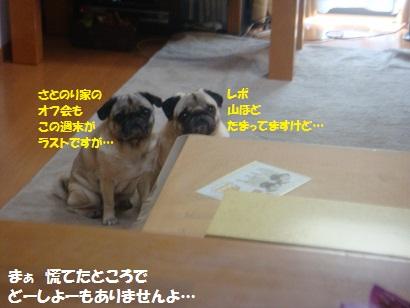 DSC05773_20120410131046.jpg