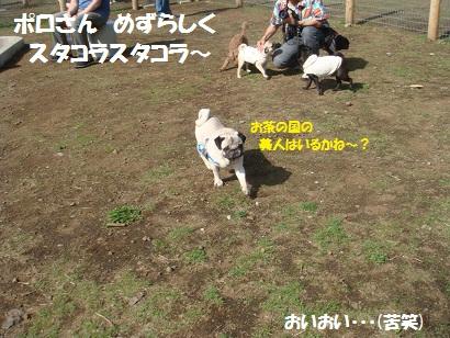 DSC05815_20111115104653.jpg