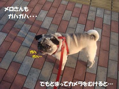 DSC05858_20120420052414.jpg