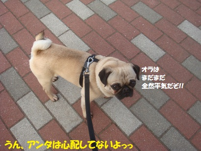 DSC05872_20120420051136.jpg