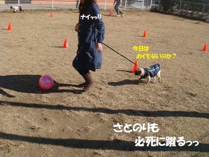 DSC05877_20120511024312.jpg