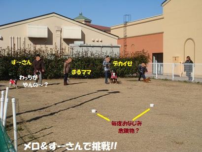 DSC05890_20120511013552.jpg