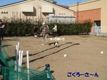 DSC05917_20120511013644.jpg