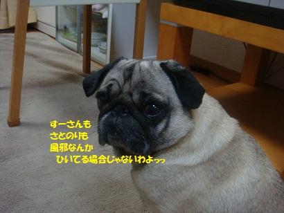 DSC05921.jpg