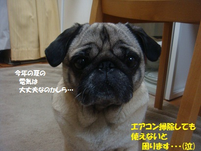 DSC05922_20120420053216.jpg