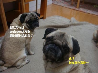 DSC05934_20120412204707.jpg