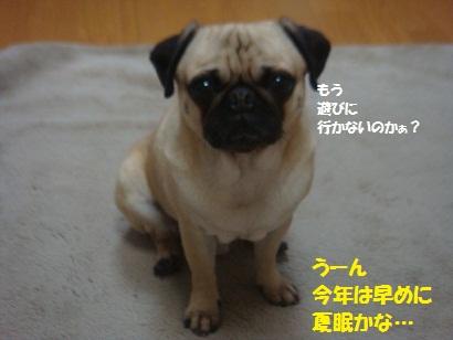 DSC05942_20120420053451.jpg