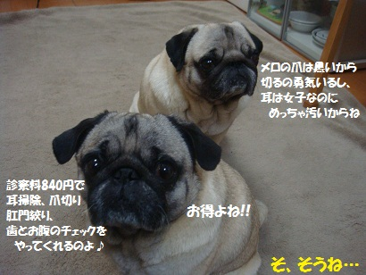 DSC05950_20120412215057.jpg