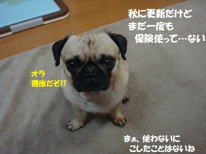 DSC05953_20120412220302.jpg
