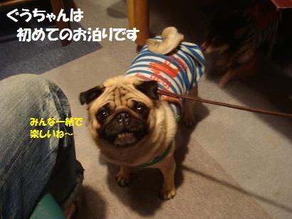 DSC05975_20111117131937.jpg