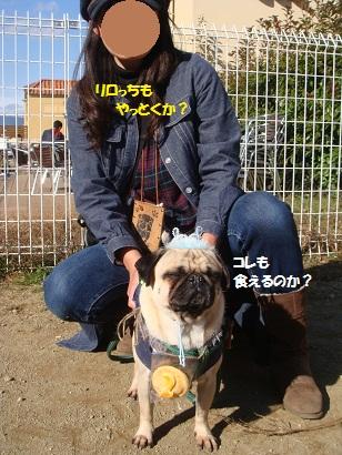 DSC06000_20120511032324.jpg
