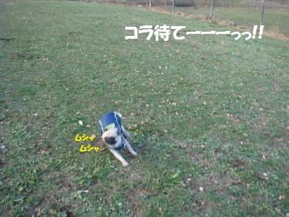 DSC06066_20120506024846.jpg