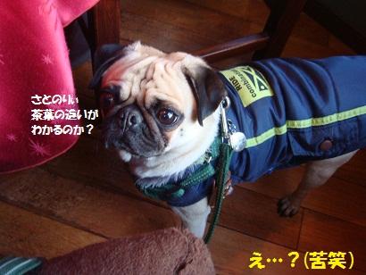 DSC06116_20120510010649.jpg