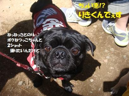 DSC06184_20111204221236.jpg