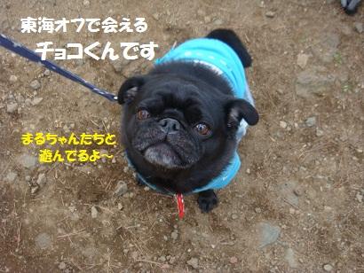 DSC06317_20111126031546.jpg