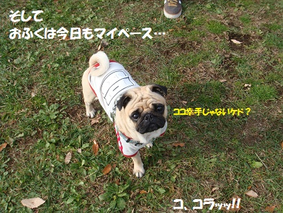DSC06433_20120526170557.jpg