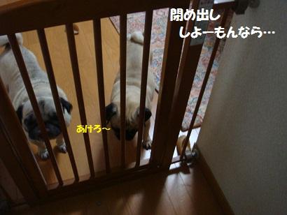 DSC06765_20111129222956.jpg