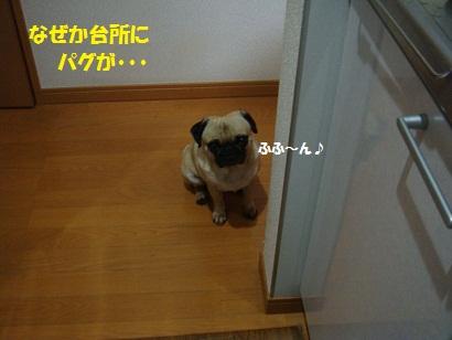 DSC06790_20111129222923.jpg