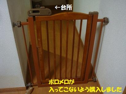 DSC06800.jpg