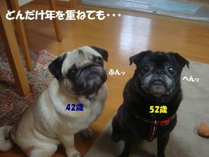 DSC06812.jpg
