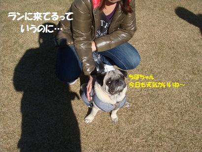 DSC06876_20120601035014.jpg