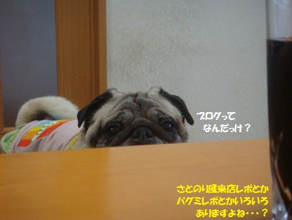 DSC06882.jpg