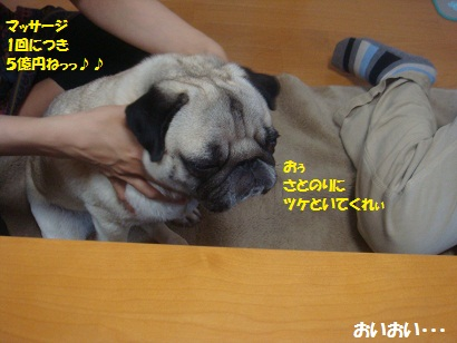 DSC06889.jpg
