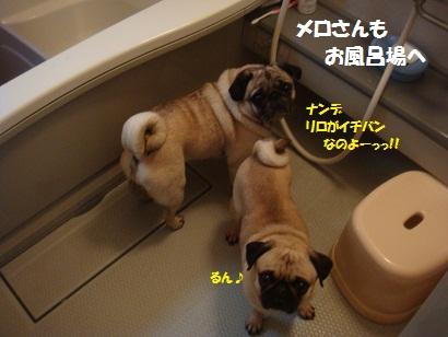 DSC06904_20120503213045.jpg
