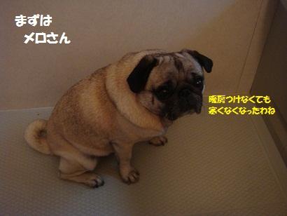 DSC06915_20120503213042.jpg