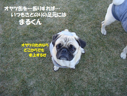 DSC06947_20120601024409.jpg
