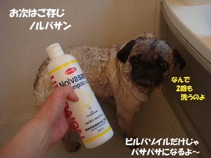 DSC06960_20120503213857.jpg