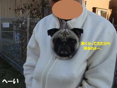 DSC06975_20120601051620.jpg