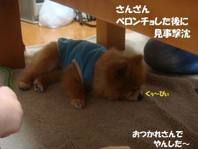 DSC06987.jpg