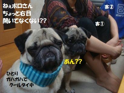 DSC06991_20111223043312.jpg