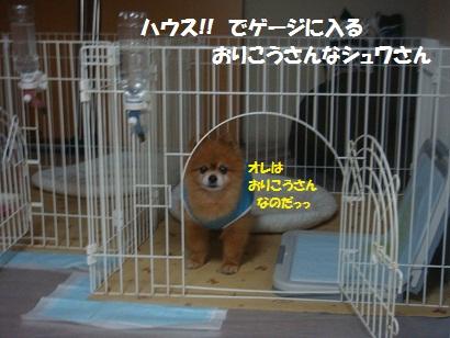DSC06992_20111223193154.jpg