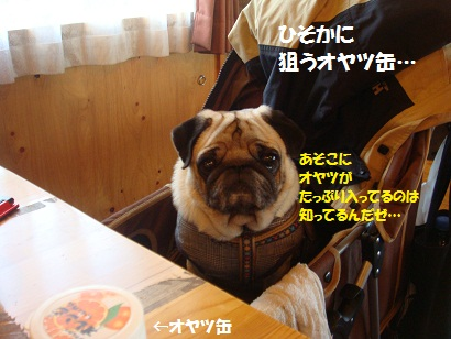 DSC07004.jpg