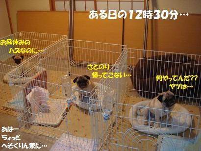 DSC07029_20111206170610.jpg