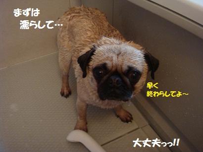 DSC07061_20120503223424.jpg