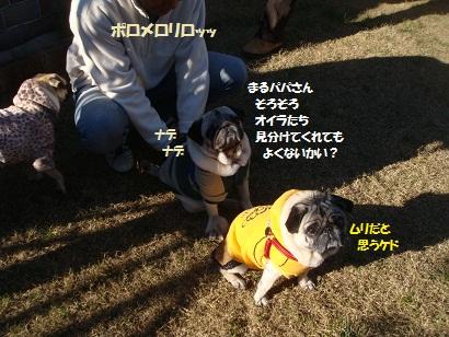 DSC07150_20120608070919.jpg