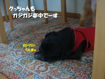 DSC07169_20111226001502.jpg