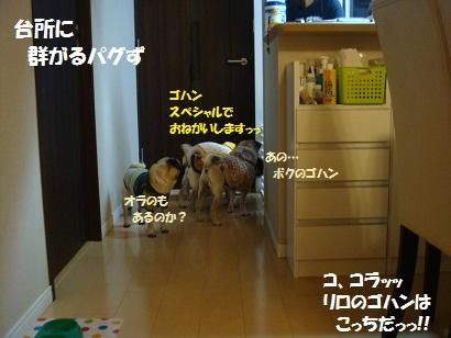DSC07210.jpg