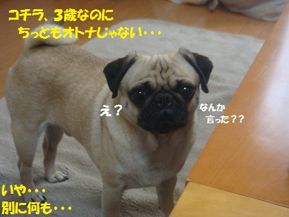 DSC07277.jpg