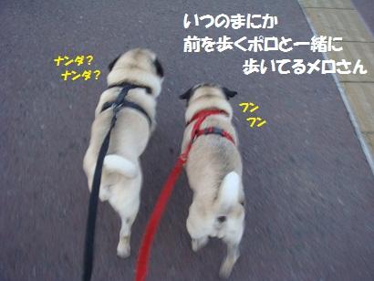 DSC07335_20111225014303.jpg