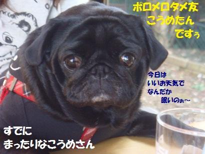 DSC07335_20120515035847.jpg